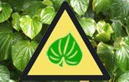 UK Tightens Its Kava Ban