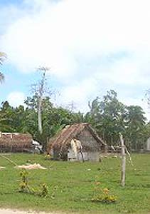 Kava and Culture: A Brief History