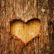 The Love of Nature – Herbal Aphrodisiacs