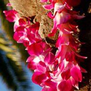 The Aloha Spirit – Kava for Planetary Healing